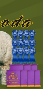 Salt Creek Alpacas - Ribbon winning herdsire Takoda